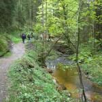 schöne Wanderung durch den Wald vor Steingaden